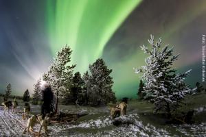 Nordlichtjagd auf dem Hundeschlitten