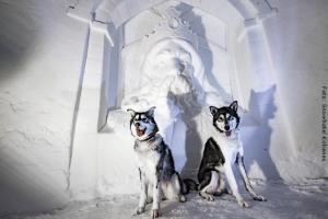 Huskys in Schneezimmer