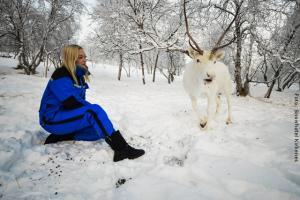 Sami Erlebnis mit Rentier