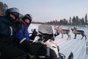 Schneemobil-Safari-Rentier