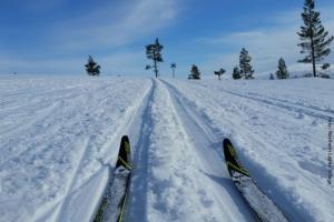 Ski-Langlauf in Lappland