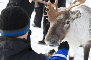 Hotel Muotka Lappland Lodge - Besuch einer Rentierfarm