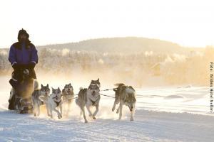 Hotel Muotka Lappland Lodge - Huskysafari