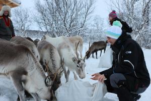 Winterreise_Lappland_ Rentierfarm