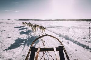 Winterreise Schwedens Norden - Husky Schlittenfahrt