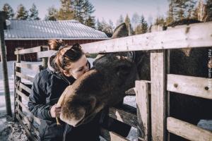 Winterreise Schwedens Norden - Rentierfarm